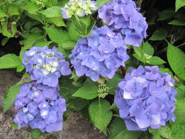 咲いていますよ。。。_f0085369_19512744.jpg