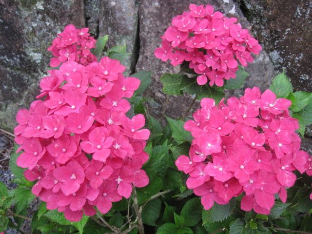 咲いていますよ。。。_f0085369_19514683.jpg