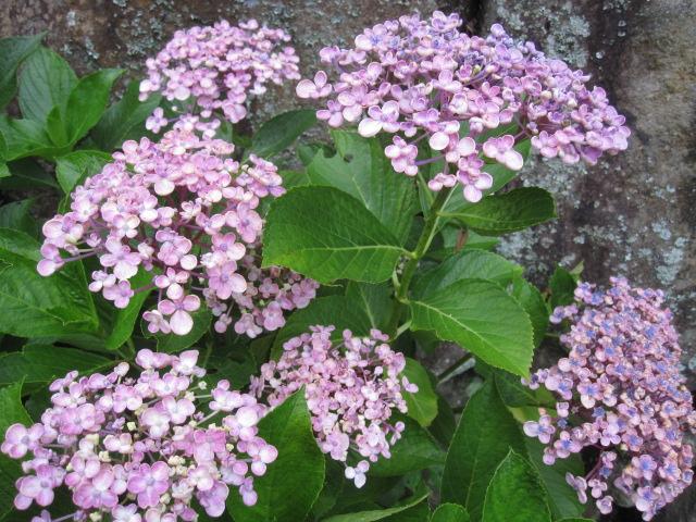 咲いていますよ。。。_f0085369_19521988.jpg