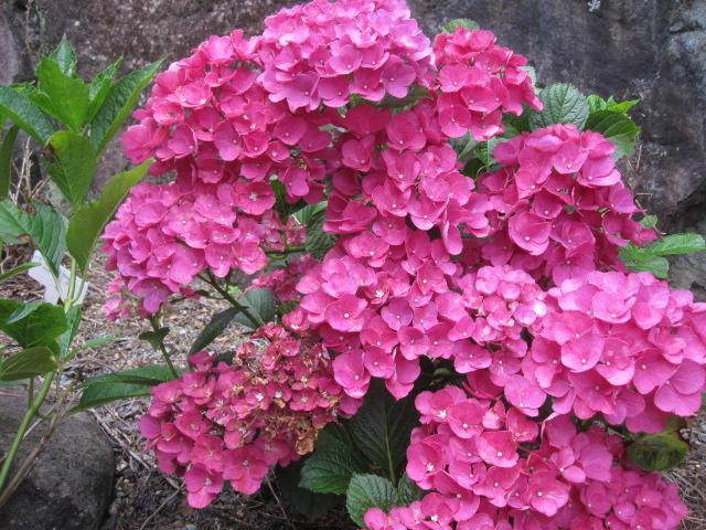 咲いていますよ。。。_f0085369_19524010.jpg