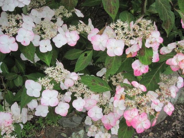 咲いていますよ。。。_f0085369_19525754.jpg