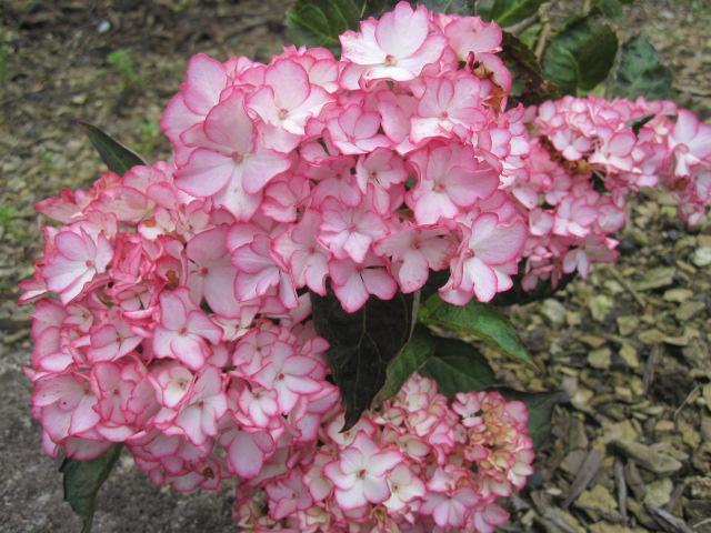 咲いていますよ。。。_f0085369_19531492.jpg