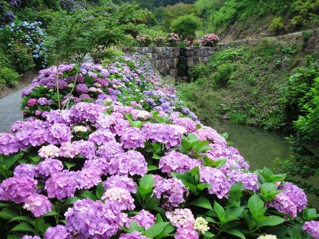 咲いていますよ。。。_f0085369_19534438.jpg