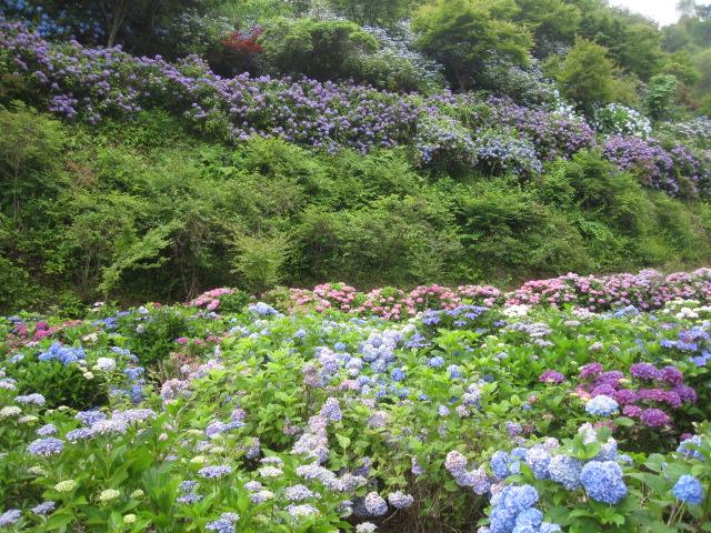 咲いていますよ。。。_f0085369_19542361.jpg