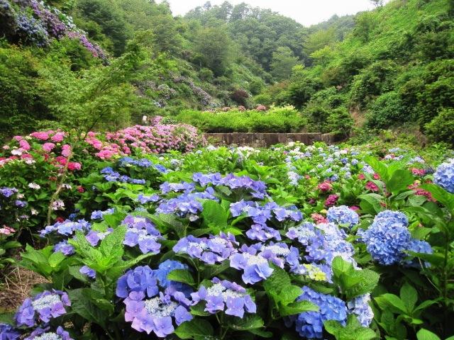 咲いていますよ。。。_f0085369_1954362.jpg