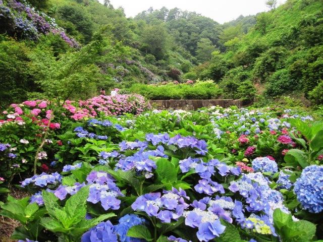 咲いていますよ。。。_f0085369_19544542.jpg