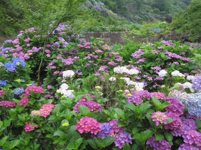 咲いていますよ。。。_f0085369_1955683.jpg