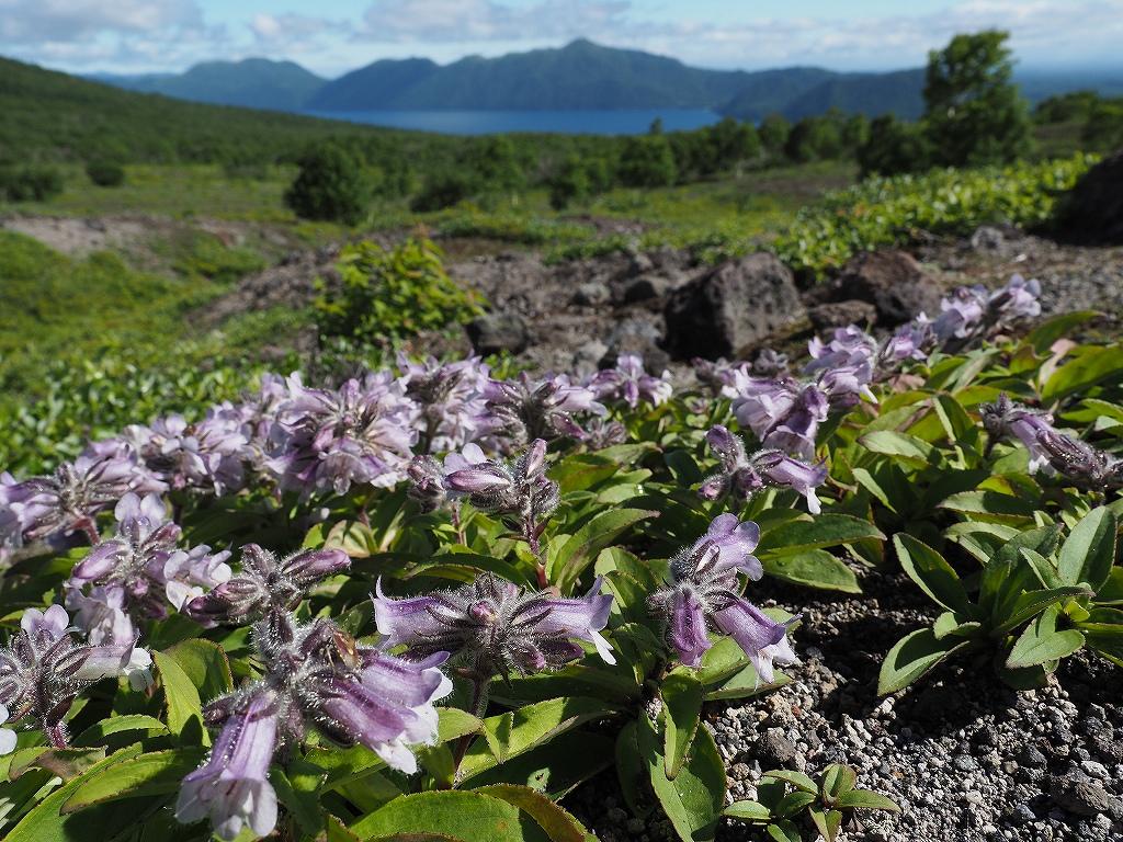 樽前山、7月3日_f0138096_18572137.jpg