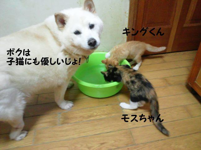 やっぱり猫が好き!(こしろう)_f0242002_1244347.jpg
