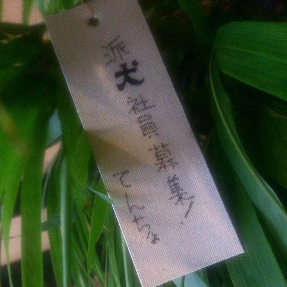 七夕_a0255809_1131036.jpg