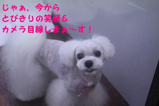 b0130018_0181067.jpg