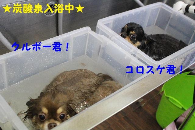 b0130018_0191936.jpg