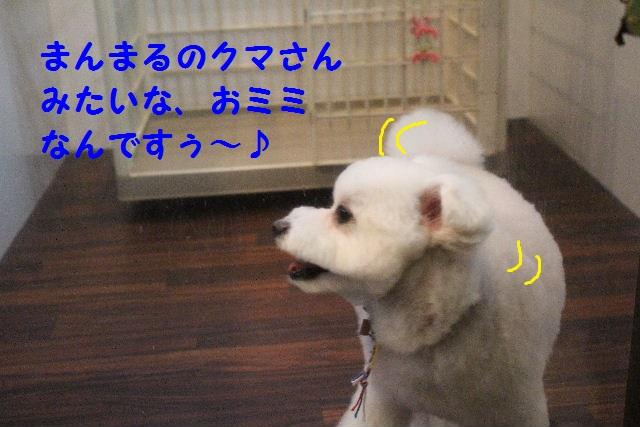 b0130018_7344818.jpg
