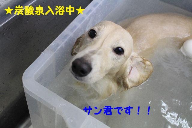 b0130018_7381492.jpg