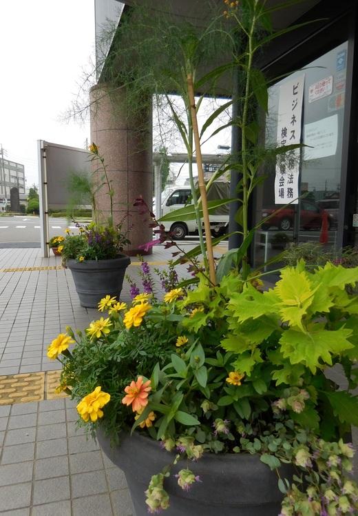 健幸の黄色い花を咲かせよう!_f0139333_2053462.jpg