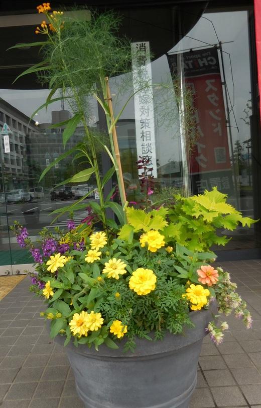 健幸の黄色い花を咲かせよう!_f0139333_20543896.jpg