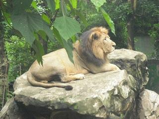 動物園_c0216937_9301864.jpg