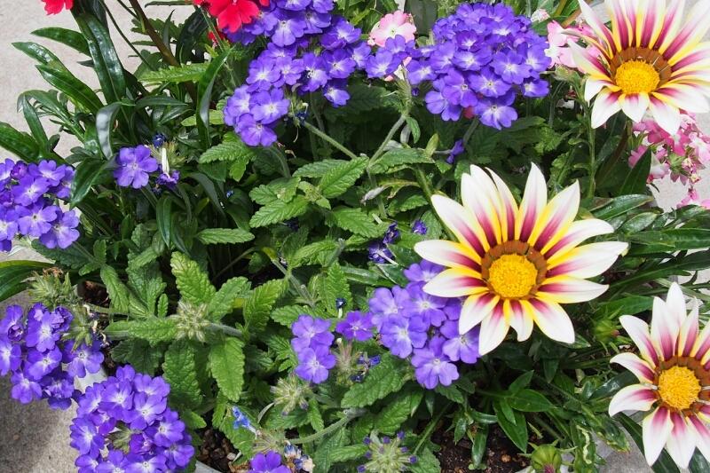 花の写真_b0106766_1114589.jpg