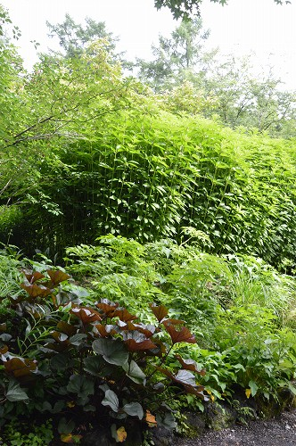 6月27日のピクチャレスク・ガーデン_c0124100_1713417.jpg
