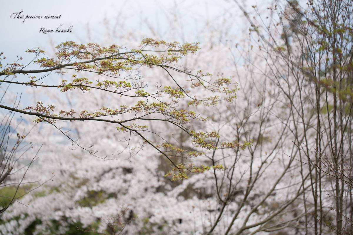 一年で一番輝きを増す季節_c0137403_16161456.jpg