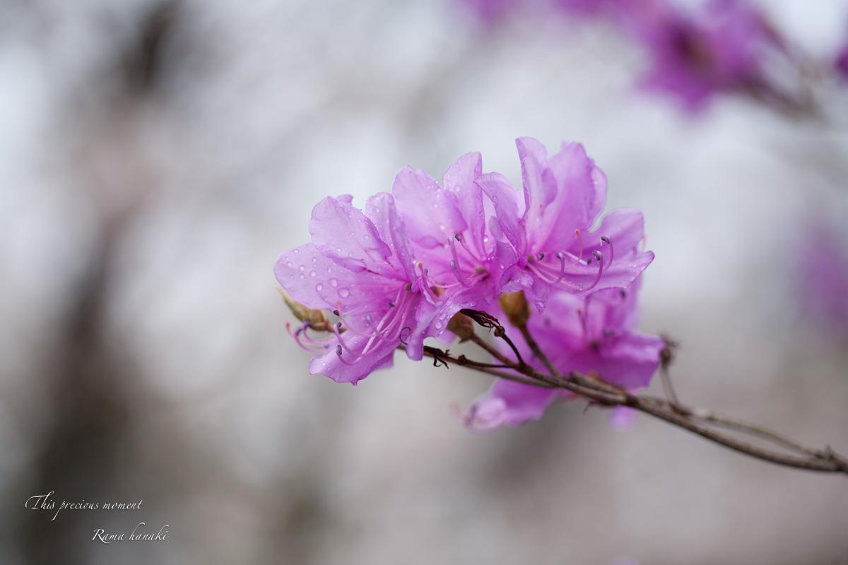 一年で一番輝きを増す季節_c0137403_16183847.jpg