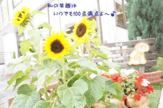 d0220513_1552420.jpg