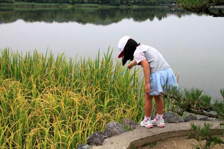広沢の池 ザリガニ釣り_e0048413_21361290.jpg