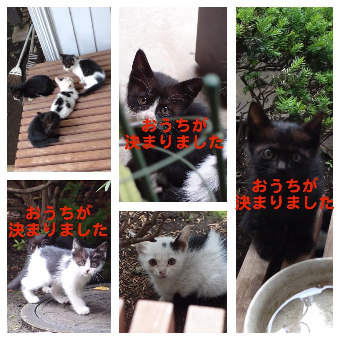 子猫の里親さんを募集しています_f0085219_21451282.jpg