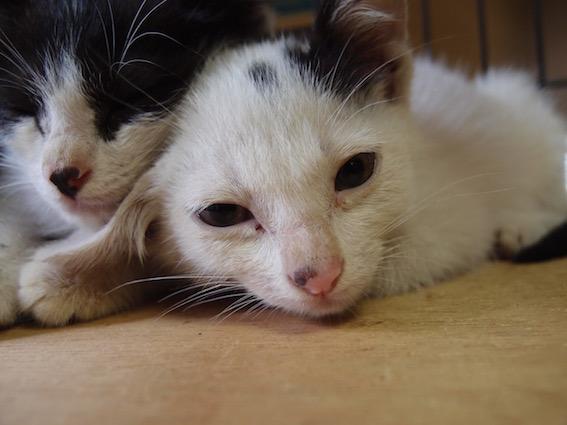 子猫の里親さんを募集しています_f0085219_2224739.jpg