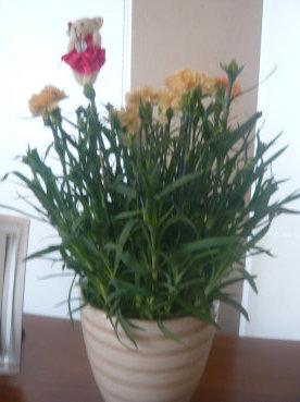 母の日冥利_c0365341_18051169.jpg