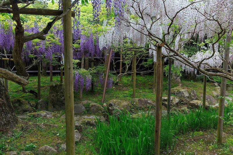 春日大社・万葉植物園の藤_f0155048_23323381.jpg
