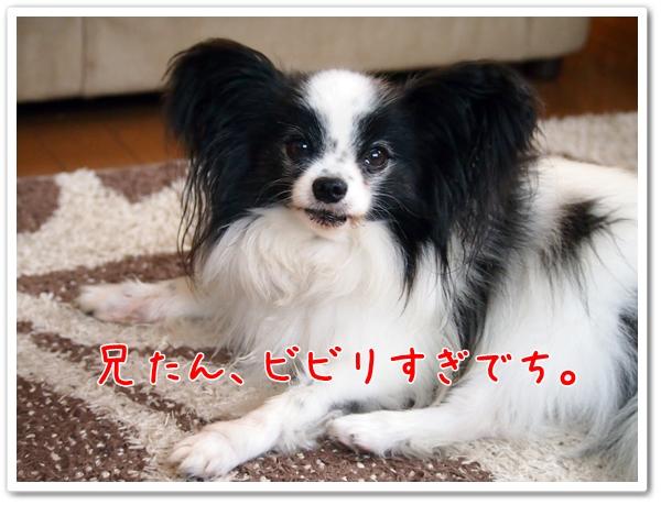 d0013149_1273134.jpg