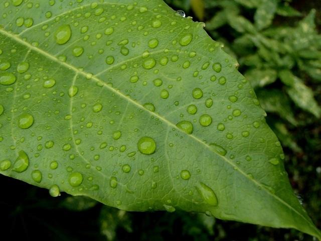 雨が続く中のお散歩 編_d0105967_18345090.jpg