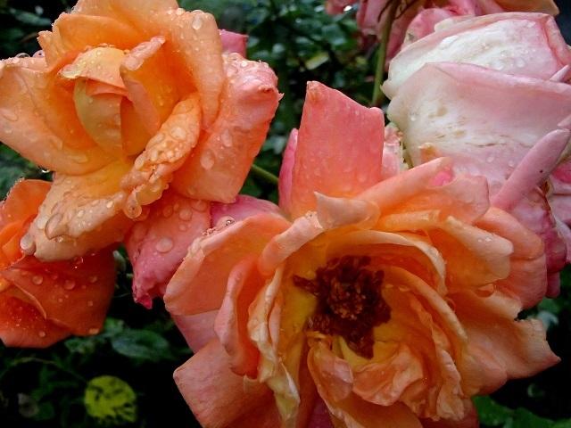 雨が続く中のお散歩 編_d0105967_18451823.jpg