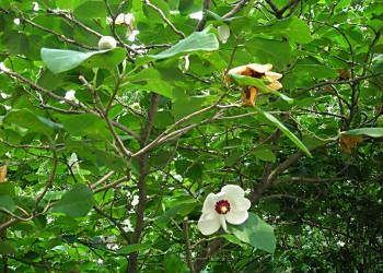 北大植物園の東縁_f0078286_1222363.jpg
