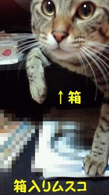 桃太郎日記(追記あり)_e0222588_17091149.jpg