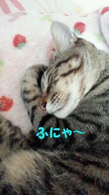 桃太郎日記(追記あり)_e0222588_17092184.jpg