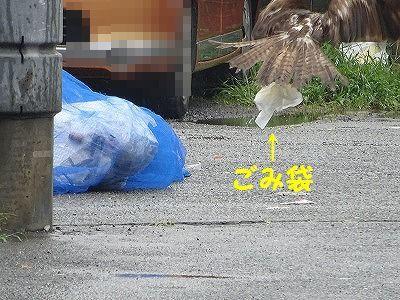 桃太郎日記(追記あり)_e0222588_17094552.jpg