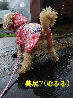 桃太郎日記(追記あり)_e0222588_17095410.jpg