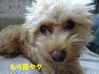 桃太郎日記(追記あり)_e0222588_17114133.jpg