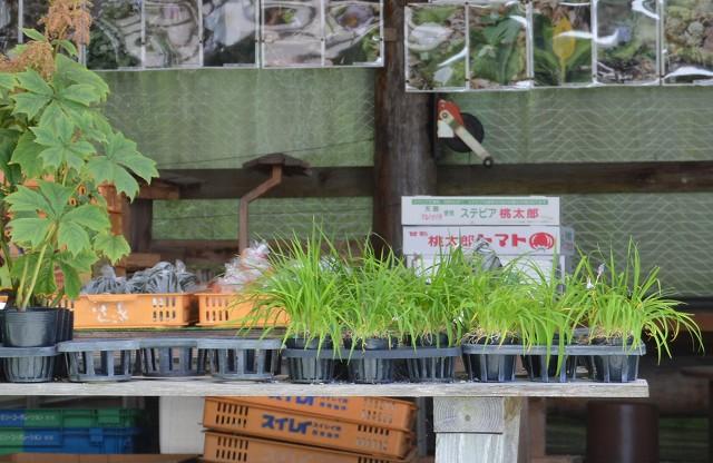 お買いもの♫ グリーンマーケット / つどいの里_c0124100_2217884.jpg