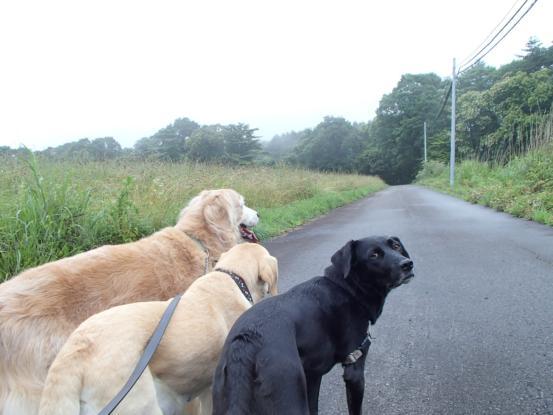 毎日雨上りの早朝散歩_f0064906_167431.jpg