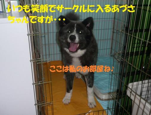 f0121712_15394637.jpg