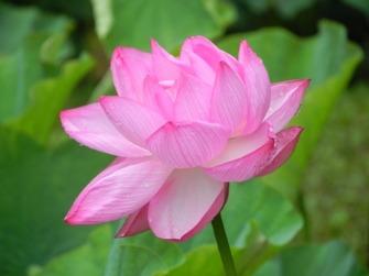 浄瑠璃寺の蓮の花と鎮魂の皿碑 2015_f0213825_151503.jpg