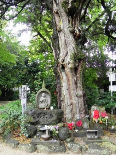 浄瑠璃寺の蓮の花と鎮魂の皿碑 2015_f0213825_15243938.jpg