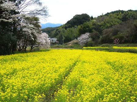 浄瑠璃寺の蓮の花と鎮魂の皿碑 2015_f0213825_19132032.jpg