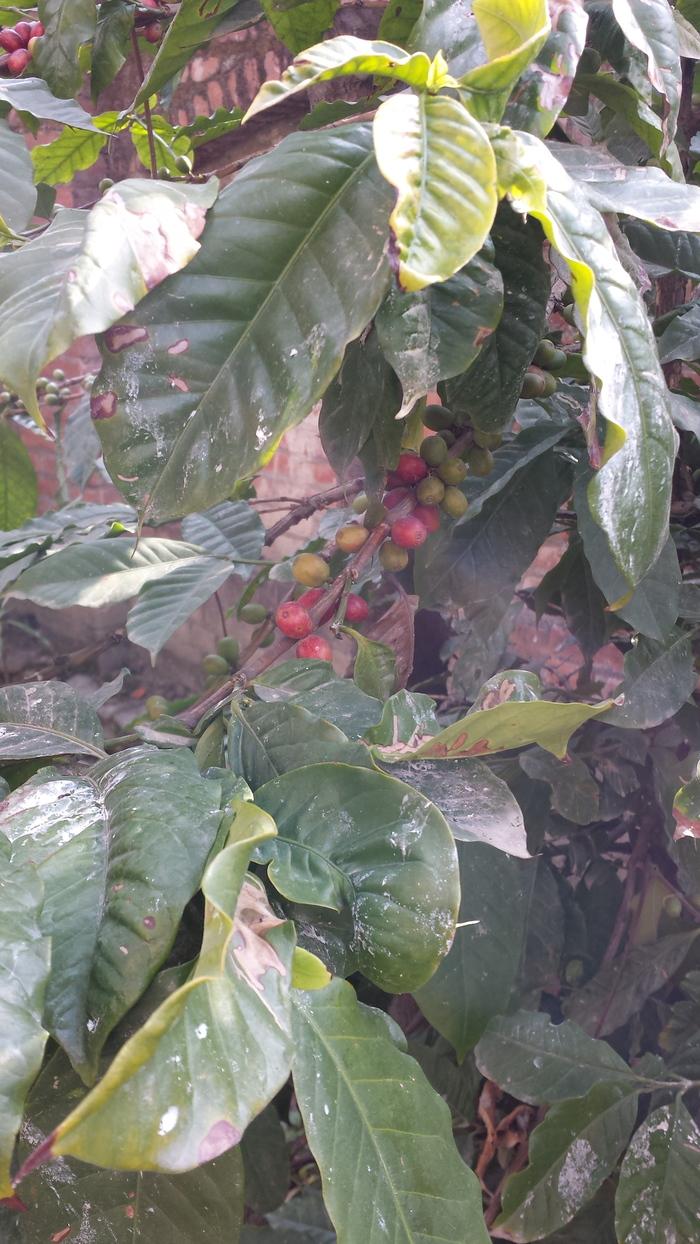 エベレスト・コーヒーの焙煎工場の続き_e0155231_13144928.jpg