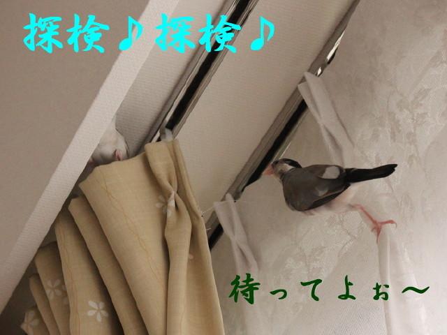 c0365734_20101327.jpg