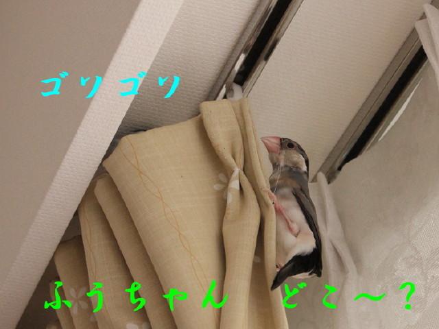 c0365734_20101549.jpg