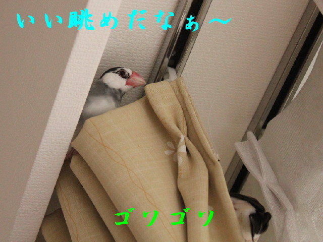 c0365734_20101779.jpg